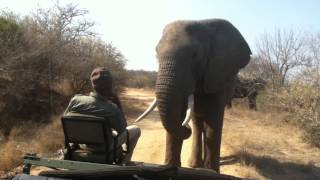 Elephant close encounter: Toro Yaka Bush Lodge South Africa