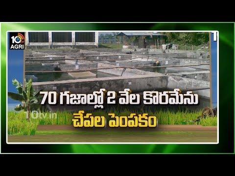 70 గజాల్లో 2 వేల కొరమేను చేపల పెంపకం | Murrel Fish Farming Information Guide | Matti Manishi | 10TV