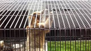 Алматинский зоопарк   Almaty Zoo №4