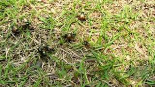 一堆金龜子群交