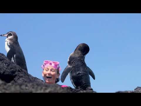 galapagos-penguin---alison's-adventures