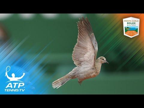 Bird interrupts Rafa Nadal's match with Kyle Edmund!   Monte-Carlo Rolex Masters 2017 Day 4