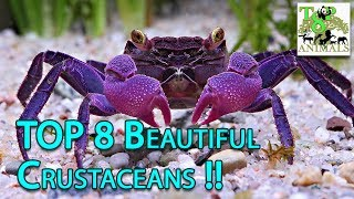 Top 8 Beautiful Crustaceans !