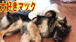 産まれた時から大型犬に囲まれて育った孫娘りりか 相変わらず、朝から時...