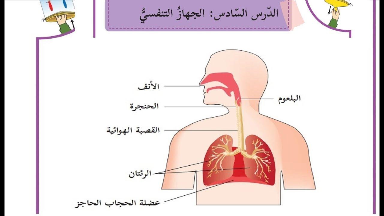 درس الجهاز التنفسي حل التدريبات الصف الرابع العلوم الدرس السادس Youtube