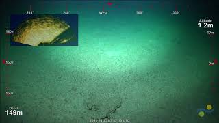 ROV Dive 417 - Ashmore Reef Location Seven, Dive 1
