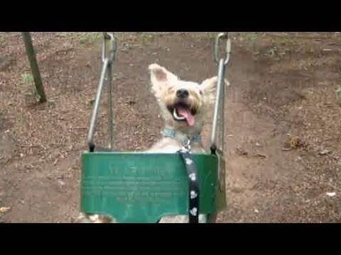 Dog on Kids Swing