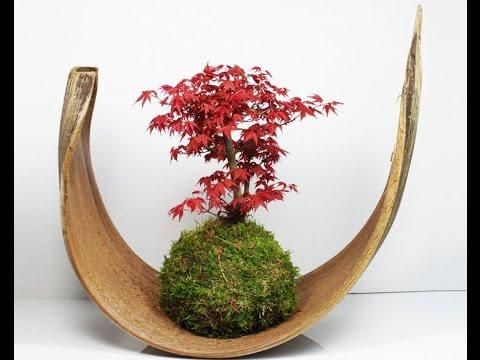 Изготовление бонсая/Дерево СВОИМИ РУКАМИ/DIY