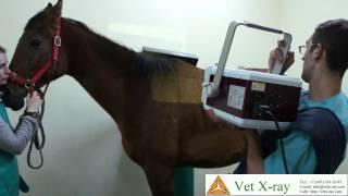 Рентгенография холки лошади аппаратом syp-5 и Wi-Fi PSA приемником