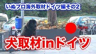 犬のしつけ飼い方でお困りの方はホームページへ https://psd.co.jp/ PSD...