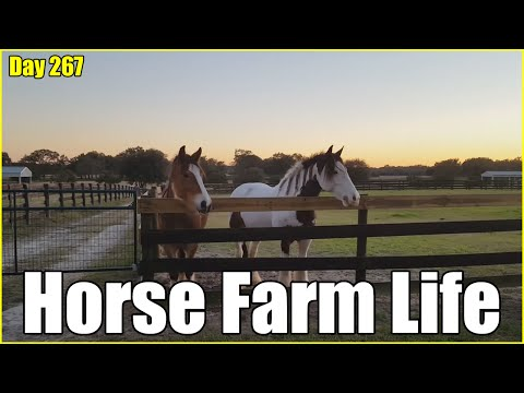 Horse Farm Life is the Best   Daily Vlog Day 267   Connerton Adventures