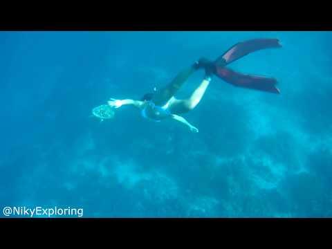 randění s mořským redditem