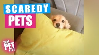Pets Who Are SO SCARED 🙀 | Funny Animal Compilation