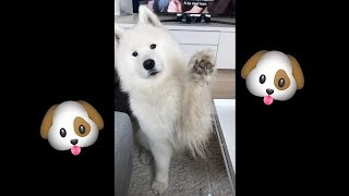 Tik Tok dog compilation (funny memes) 🐶