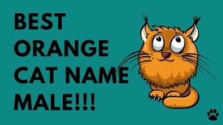 Orange Cat Name Male - 43 GREAT NAMES IDEAS - Names!!!