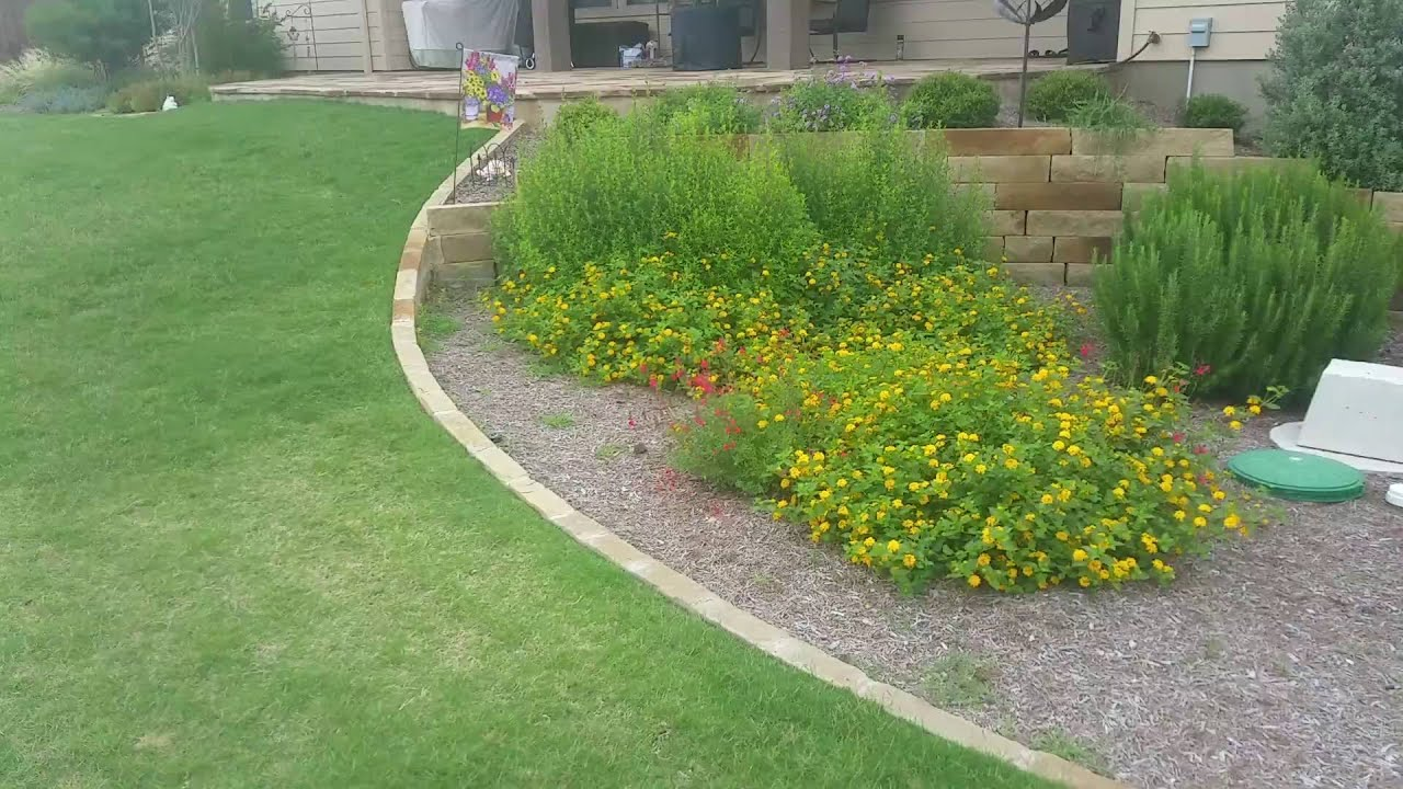 austin landscape design with wildflowers