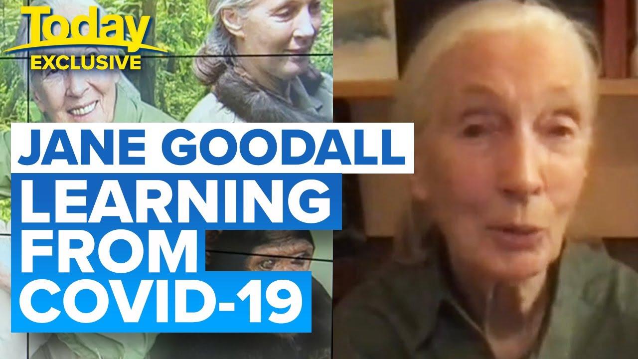 "Jane Goodall blames our ""disrespect of animals"" for coronavirus pandemic | Today Show Australia"