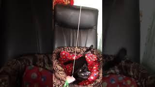 Очень ласковый и нежный черный котенок мальчик Рэй 3 месяца ищет свой дом в добрые руки