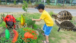 Hunting Insects and Animals Toys For Kids – Fun Learning Video with Surprise Toys For Children