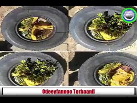 Odeeyfannoo Torbaanii Sadaasa 28/2017 Miidiyaa Barnoota amantii islaamaa fi seenaa Oromoo irraa!