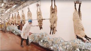 Yün Hasadı Nasıl Yapılır - İnanılmaz Koyun Fabrikası - Yün İşleme İmalathanesi