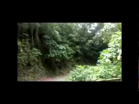 Up in the hills of Hanover Jamaica on Bamboo Road 2012