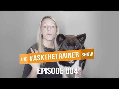 HOW TO STOP PUPPY BITING, PREVENT JUMPING & SOCIALIZING AN ADULT DOG | #ASKTHETRAINER 004