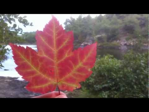 Growing Maple Trees: Growing Trees From Seed: S01E02