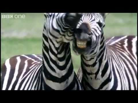 Funny Talking Animals - Walk On The Wild Side (BBC One) Cream