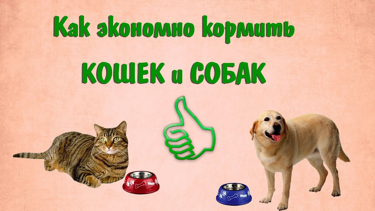 как знакомить кошек и собак