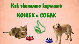 Как экономно и вкусно кормить кошек и собак