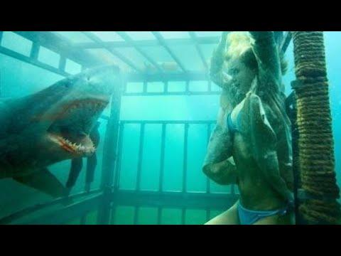 [全ムービー]  ハリウッドホラー映画サメ夜素晴らしいホラー映画英語Hd 720P