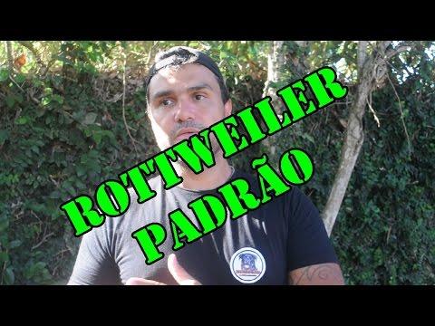 Rottweiler Padrão