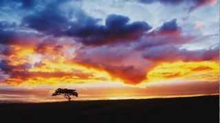 Smashing Pumpkins w. John Popper - Porcelina - 10/19/97 - [AUDIO + Nature Mix]