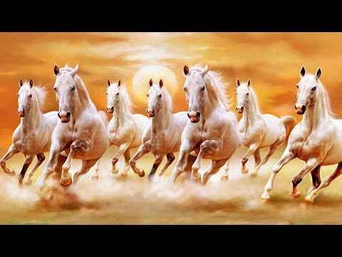 7 White Horse Images Hd Allofthepicts Com