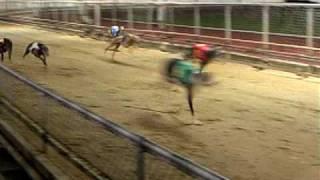 香港、マカオ研修で見学したドッグレースです。