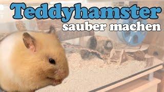 Ängstlicher Hamster: Gehege säubern