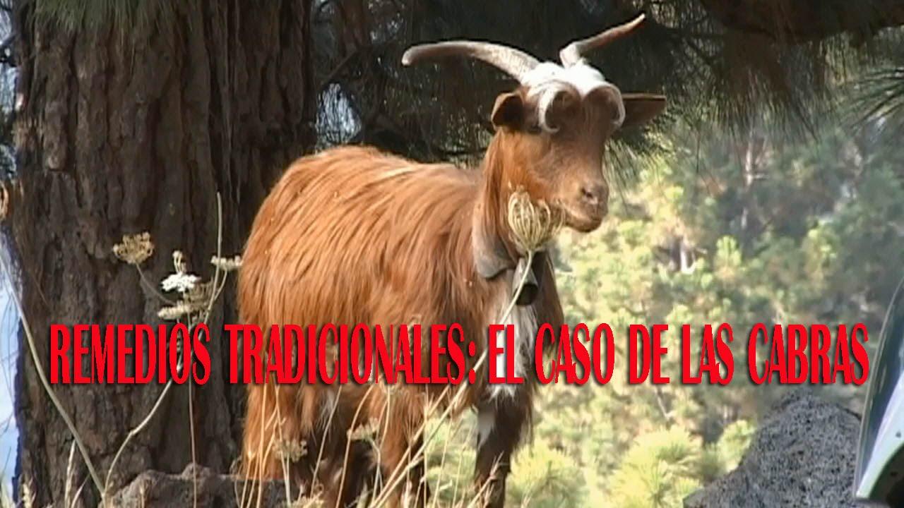 REMEDIOS TRADICIONALES : EL CASO DE LAS CABRAS - YouTube