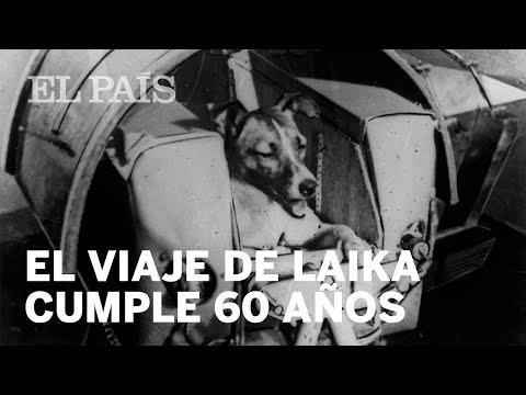 60 años del viaje de Laika   Ciencia