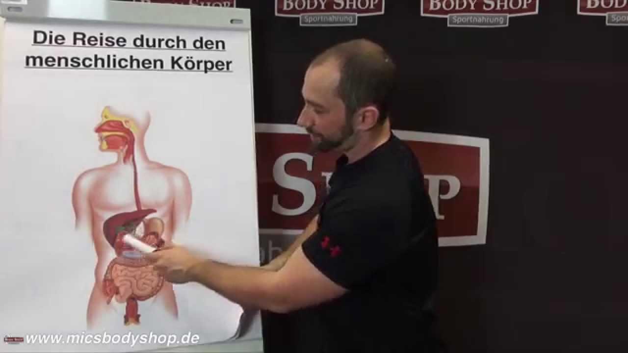Reise durch den menschlichen Körper - 4 - Der Magen - YouTube