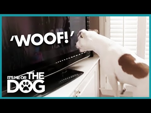 how-to-make-your-dog-stop-barking-|-it's-me-or-the-dog