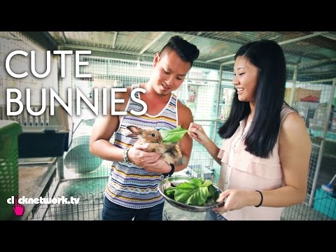 Cute Bunnies - It's a Date! EP8