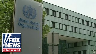 World Health Organization under scrutiny for not acting fast enough