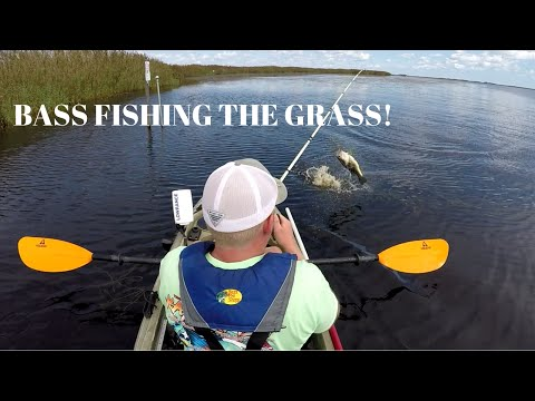 Bass Fishing In The Grass (back Bay)