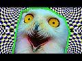 Как работает гипноз на самом деле?