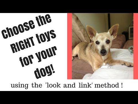 how-to-choose-the-right-toys-for-your-dog!