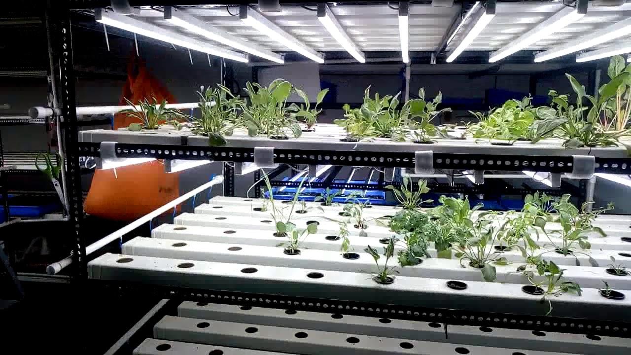 Walk  through An Urban Aquaponics Vertical Farm