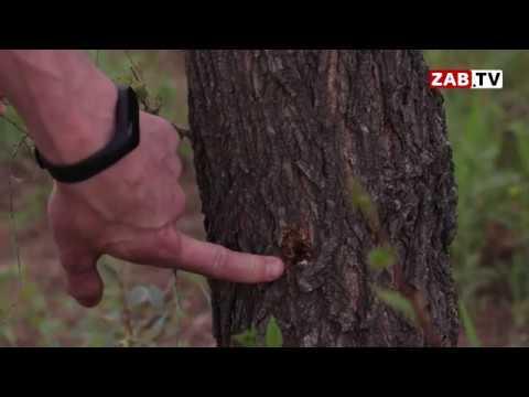 Радеющие за наружную рекламу нашли новый метод уничтожения деревьев