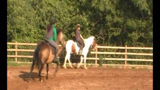 Honey Dun - flatwork 4th july 2013