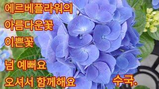 441회 에르베플라워의 꽃이 예뻐요 함께 보실래요.
